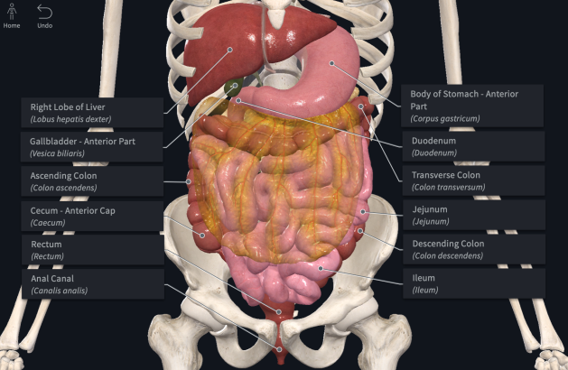 digestive_system_with_labels