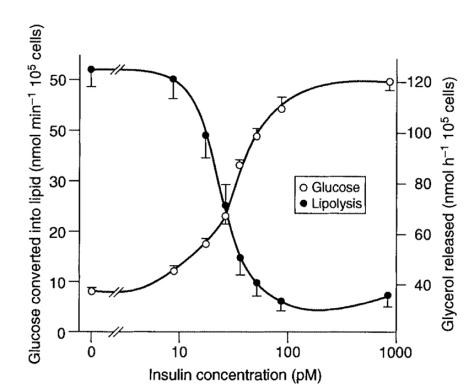 insulinFatStorageFatRelease